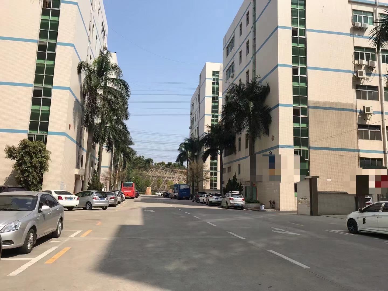 大浪原房东红本一楼精装修2680平厂房仓库出租价格优惠大小分