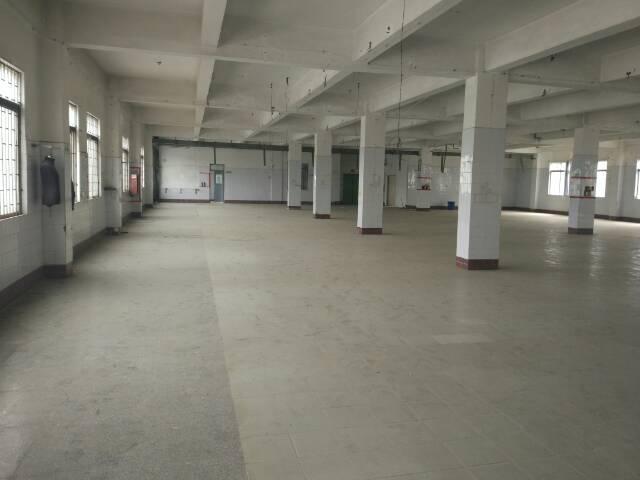 松岗大田洋新出一楼厂房1400平方米低价招租