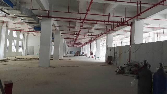 松岗107国道附近全新厂房出租一楼2000平方可以分租-图2