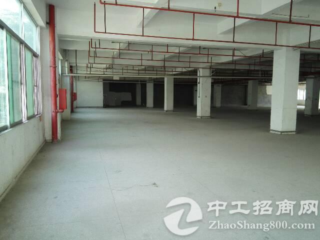 观澜新出标准厂房2556平急招租中-图3