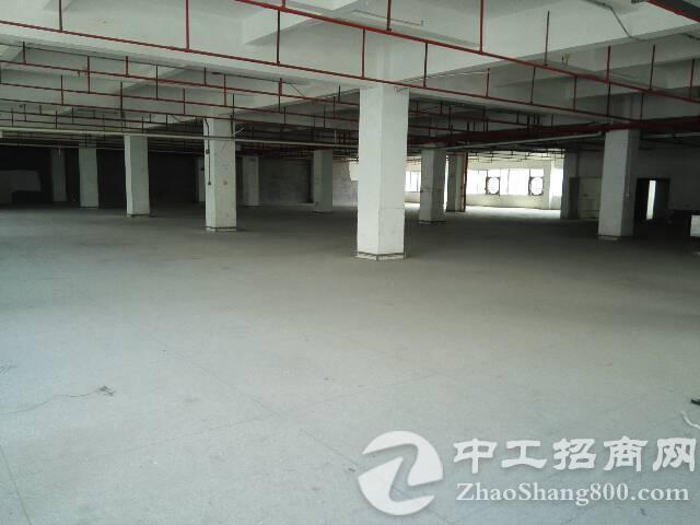 观澜新出标准厂房2556平急招租中-图4