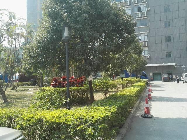 龙华福龙路出口花园式厂房红本9500平1-2层-图5