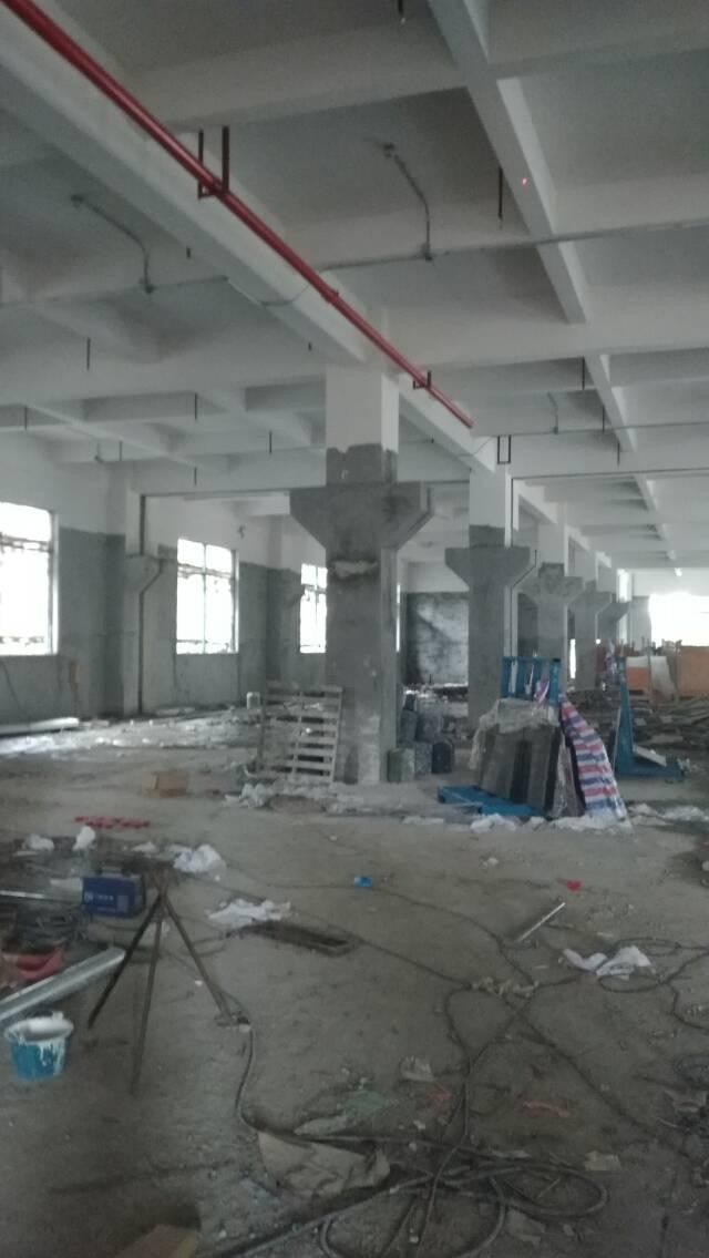 独门独院全新厂房招租
