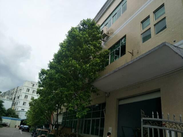宝安福永白石厦1楼带精装修厂房