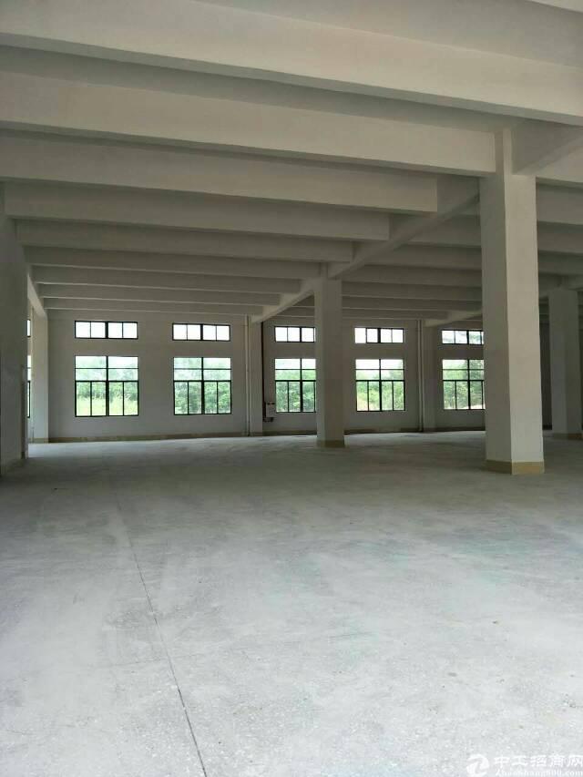 企石东部快线边上标准厂房一楼出租1700平方(有现成装修)