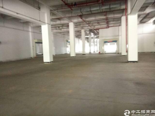 盐田港标准物流仓库,大空地带充足停车位,充足卸货平台