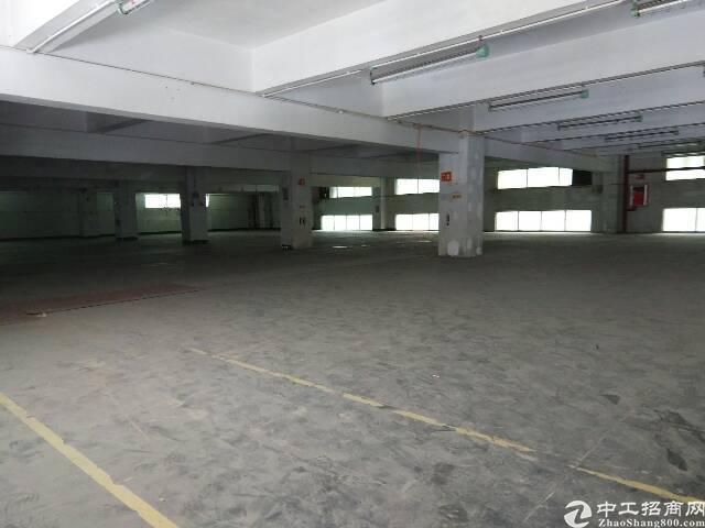 横岗原房东厂房一楼仓库出租约2500㎡-图4