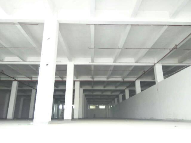 坑梓镇新出独栋标准物流仓库低价出租,空地超大-图3