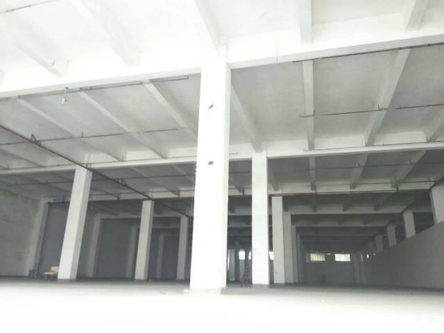 坑梓镇新出独栋标准物流仓库低价出租,空地超大-图2