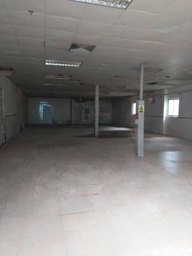 横岗大型工业区厂房250平方,可以做家具,小加工,仓库等-图2