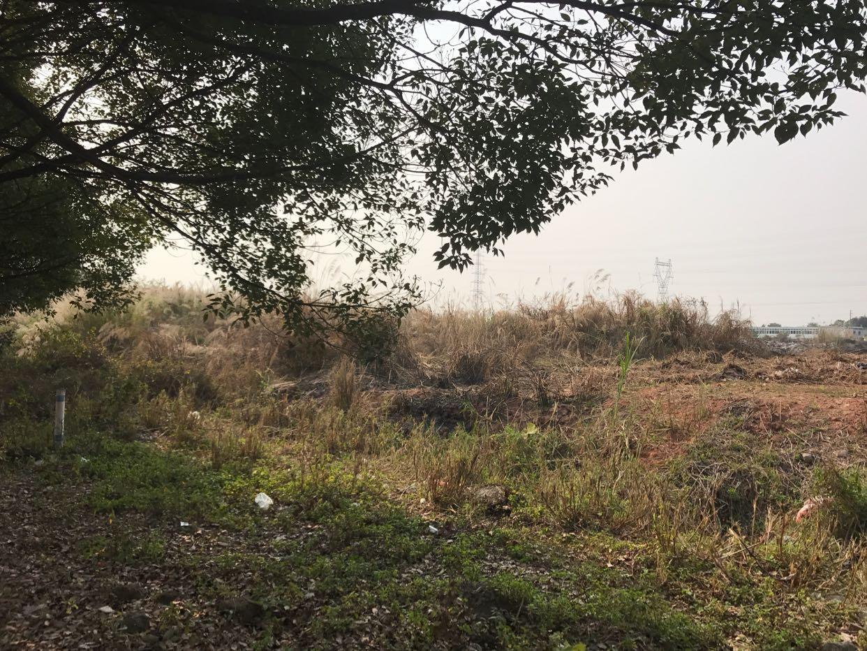 广东省江门市国有证土地出售
