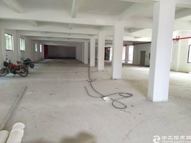 黄江镇板湖村新出一楼1500平米标准厂房一楼-图4