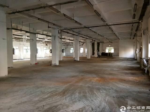 新空出公明主干道松白路边带装修2500平独院厂房出租-图2