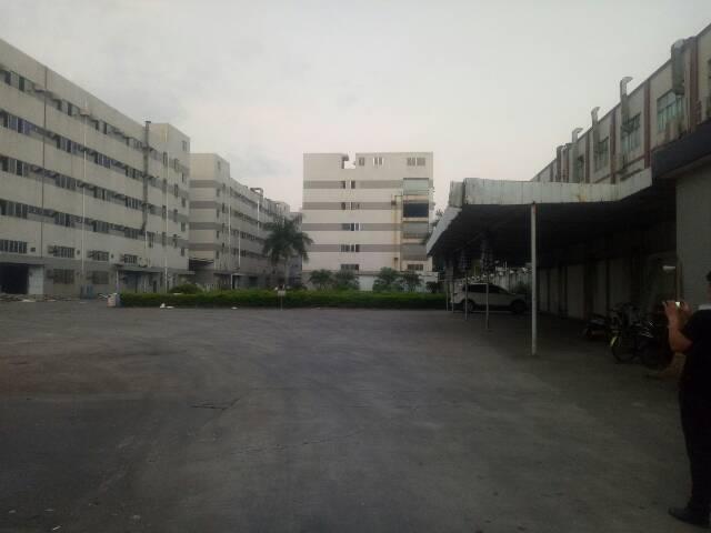 沙井共和新出楼上1300平方带消防喷淋厂房招租
