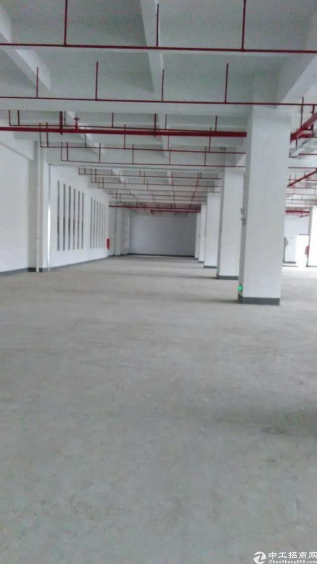 松岗主干道边上新出全新红本厂房20000平米-图2