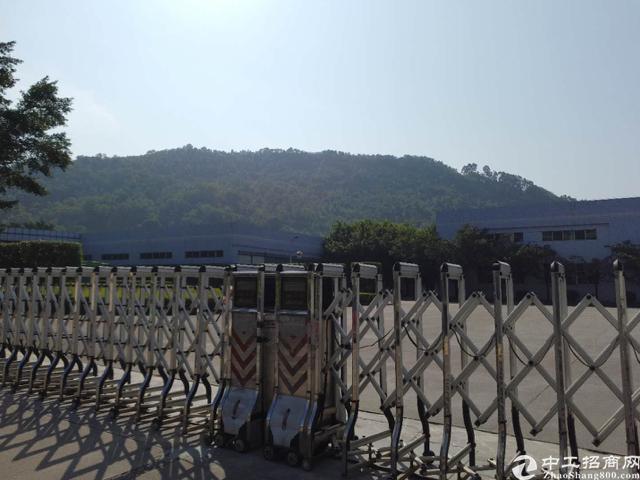 大亚湾红本独院钢构厂房40000平、十米高可分租