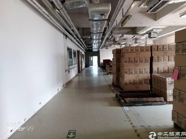 福永凤凰新出装修厂房2500平,免转让费