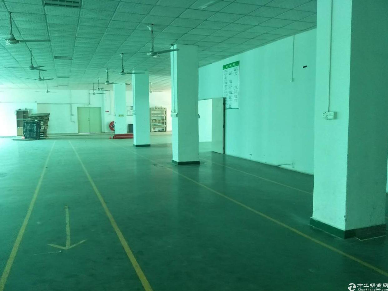 龙华汽车站后面新出工业园1256平,原房东!实际面积1200-图4