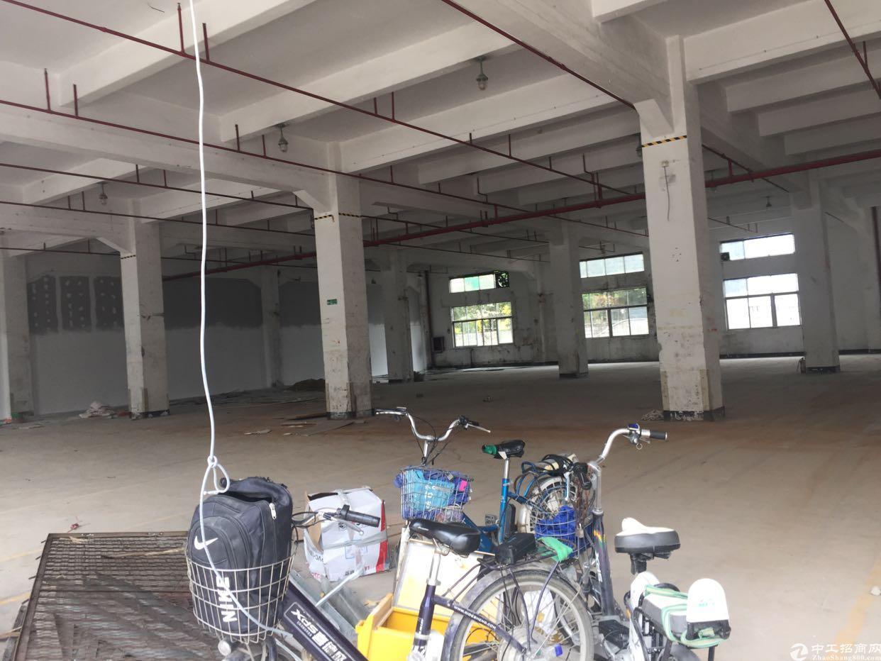 大浪华兴路边上新出一楼2000平厂房招租-图5