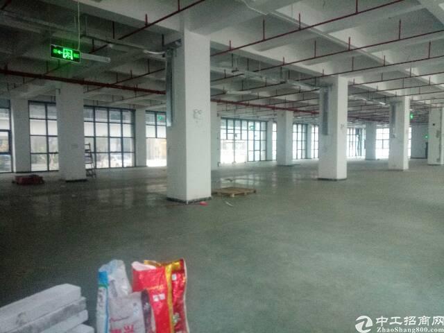 龙华大浪新出一楼2800平方厂房-图2
