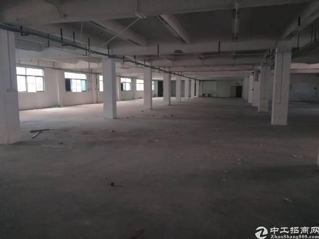 公明松柏路旁边新出一楼2200平带装修免转让费标准厂房出租-图4
