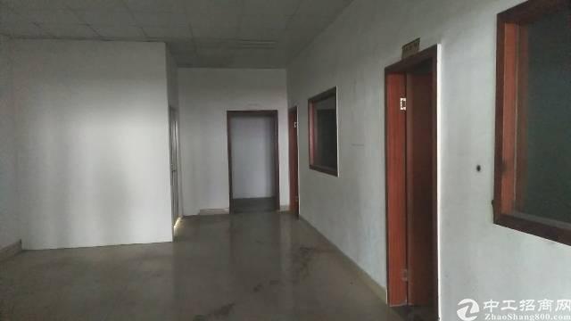 公明主干道边新出楼上1600平带装修免转让费标准厂房出租-图4
