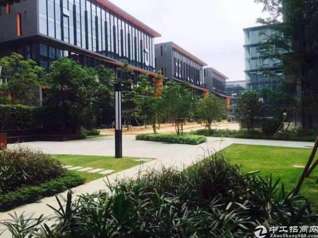 龙岗宝龙高薪低商务办公园区1600平图片5