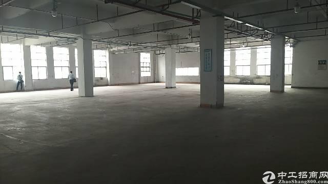 公明主干道边新出楼上1600平带装修免转让费标准厂房出租-图2
