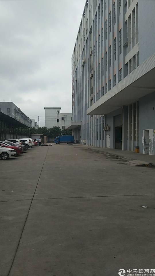 公明主干道边新出楼上1600平带装修免转让费标准厂房出租