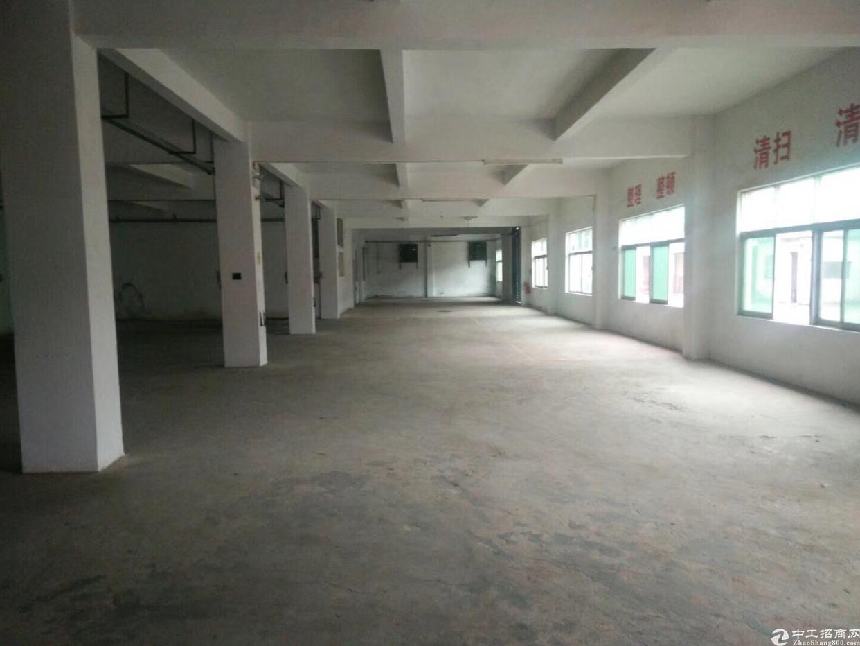 松岗新出原房东一楼880平米厂房出租