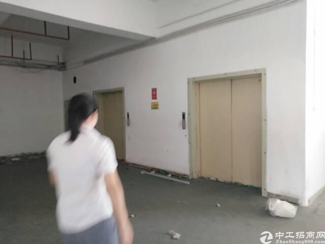 石岩专业物流园楼上5000平方仓库出租-图2