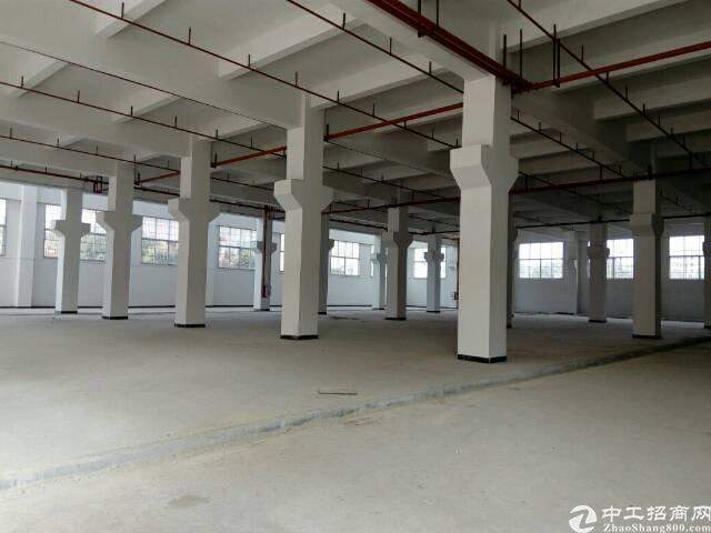 茶山全新高标准独院厂房15000平米出租-图3