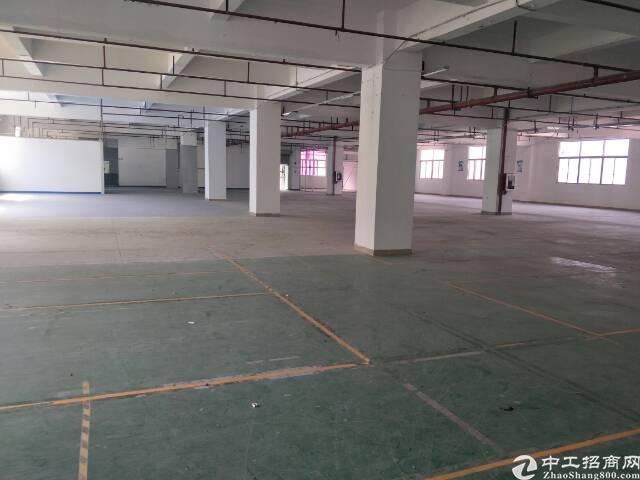 福永107国道边独门独院6000平米厂房出租-图3