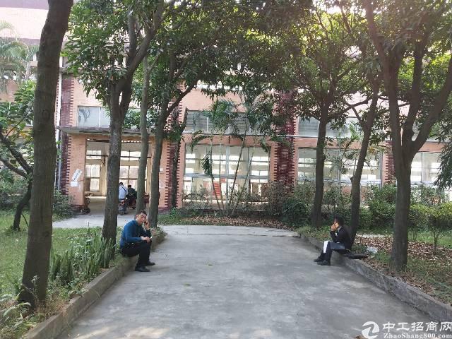 长安镇沙头村沙头南区附近11米高独栋钢构2400平米招租