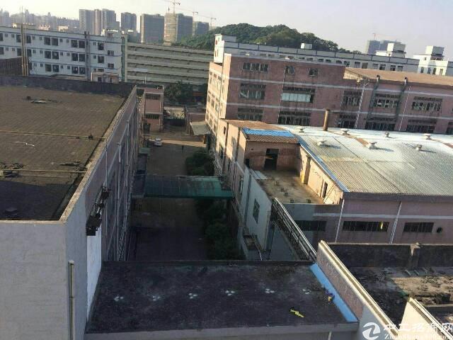 福永约29000平方红本厂房出租,有国家高新技术补贴-图4