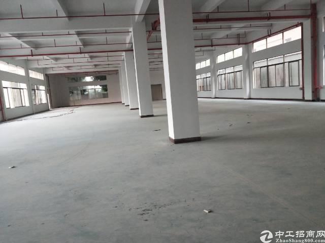 企石镇独门独院标准厂房出租-图6