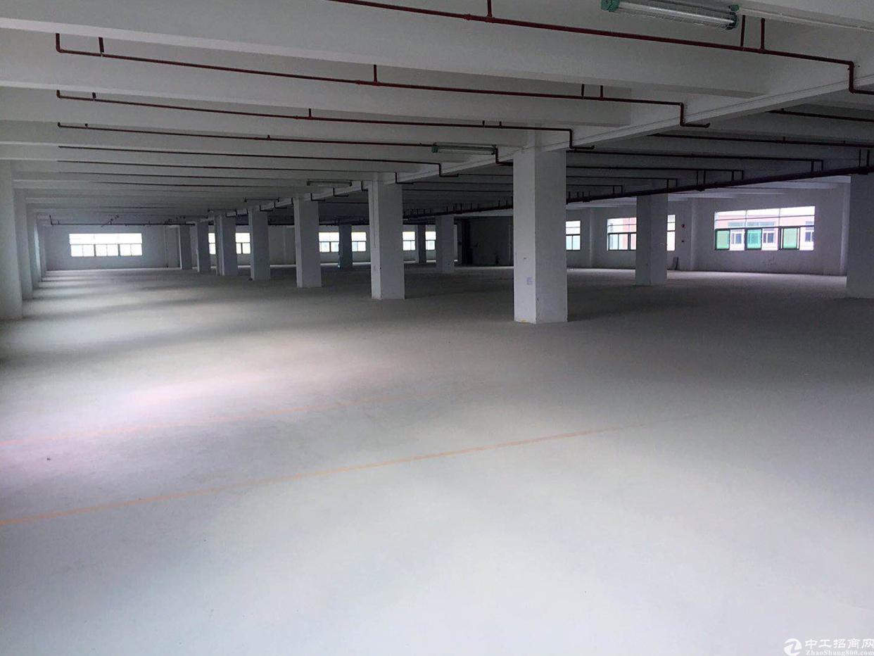福永凤凰带红本高新产业园39000平方隆重招商大小分租-图3