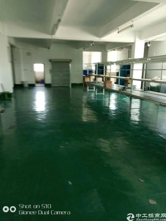 坪山东纵路面带地坪漆和精装办公厂房1200平