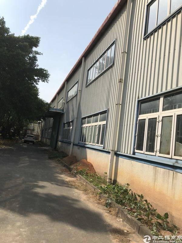 石岩仓库1980平米厂房出租,高度12米高-图3