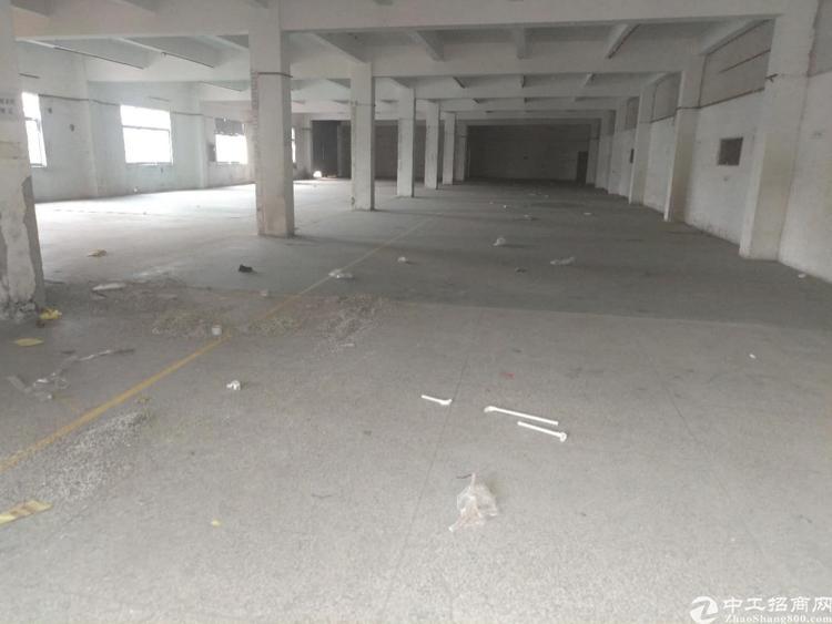 横岗六约社区精装修厂房3000平方大小可以分-图2
