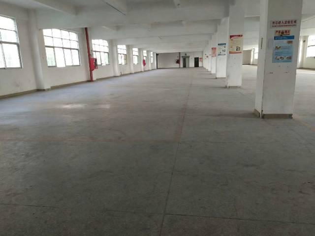 公明将石新出独院三层厂房6000平米-图5