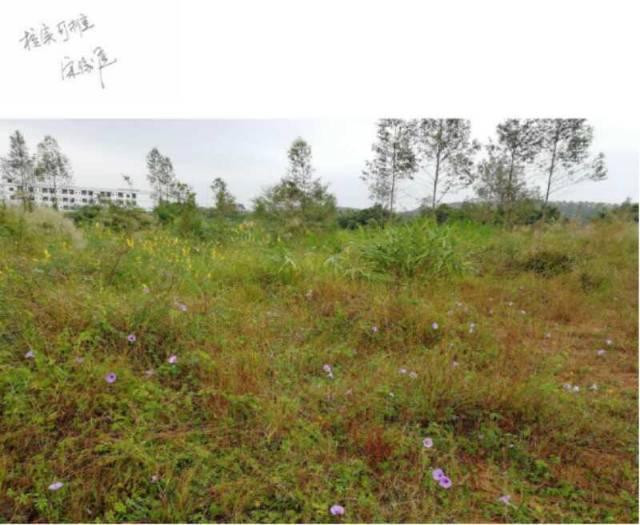 江门市鹤山双合镇占地 67772国有证土地出售