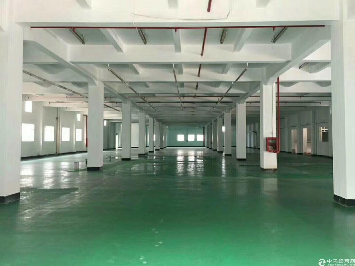 新出原房东标准厂房1600平方招租