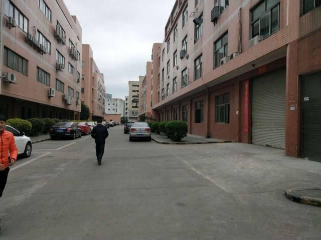 观澜中心地带新出一楼厂房-图3
