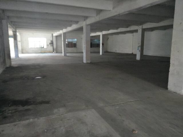 横沥新出标准一楼1000平方