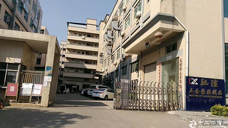 沙坑二路新出办公厂房低价招租600平米-图3