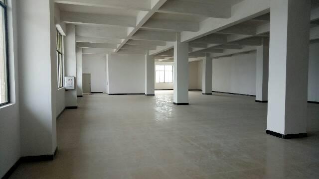 广州新塘镇新出原房东独院带装修厂房出租