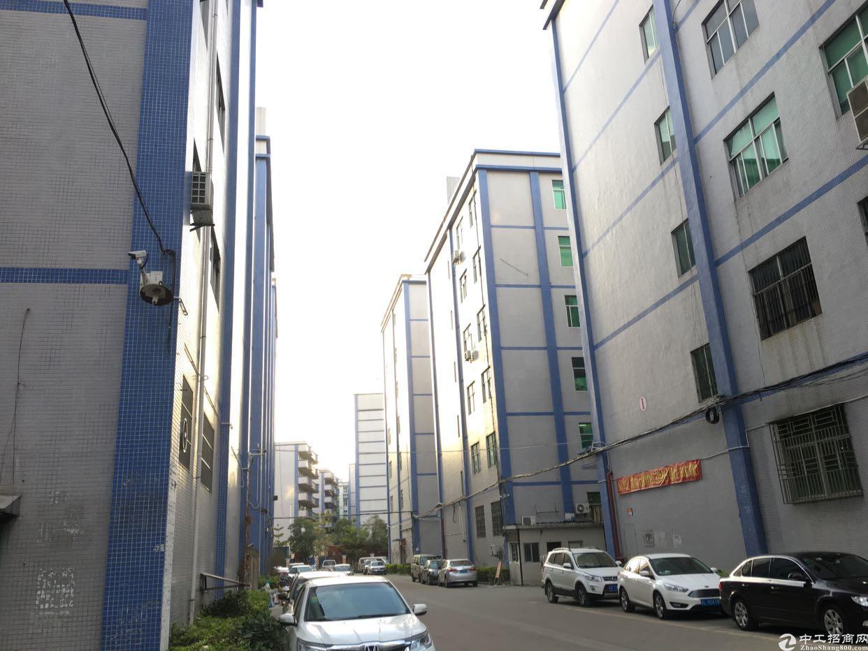 深圳公明主干道边上红本独院10栋厂房10万平方可分租-图3