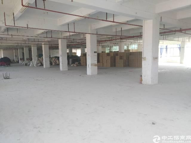 茶山镇独门独院厂房招租-图2