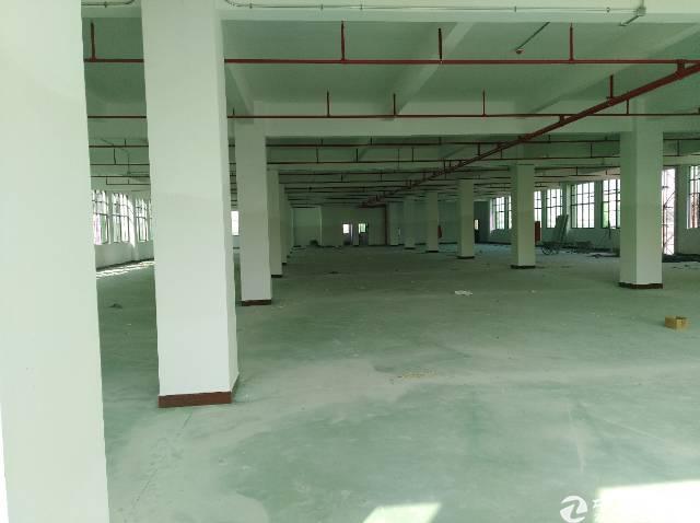 茶山镇独门独院现成家具厂房招租